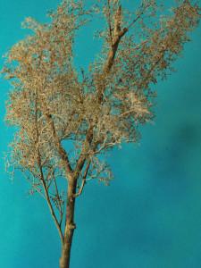 albero_2009_08_12_003