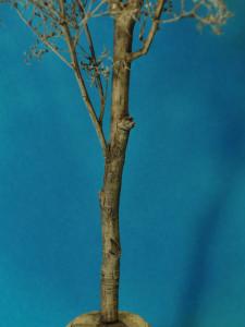 albero_2009_08_12_007
