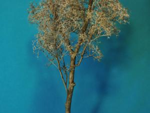 albero_2009_08_12_008