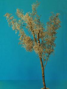 albero_2009_08_12_011